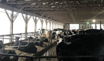 Local farmers say the Farm Bill is a good start to alleviate problems facing the dairy industry. (Photo by Pete DeMola)