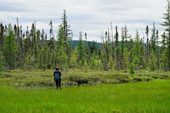 Field technicians performing auditory surveys in boreal habitat at Shingle Shanty Preserve and Research Station. (Credit:Steve Langdon)