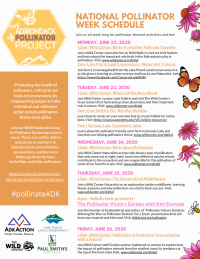 National Pollinator Week Celebrated in the Adirondacks