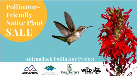 AdkAction's Adirondack Pollinator Project 2021